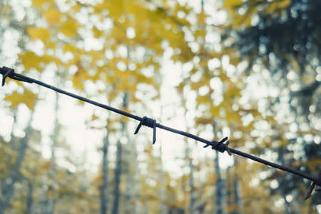 Foto de Old rusty barbed wire in the forest close up - Imagen libre de derechos