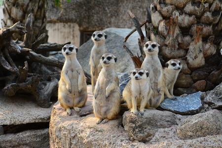 Foto de animals - Imagen libre de derechos