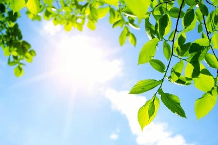 Photo pour Green leaves with sun ray - image libre de droit
