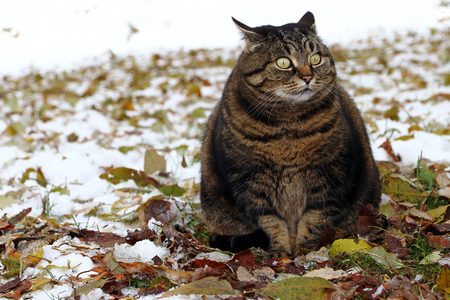 Photo for A little fat cat with a funny look - Royalty Free Image