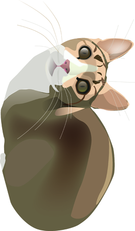 Illustrazione per Tabby cat looking at you - Immagini Royalty Free
