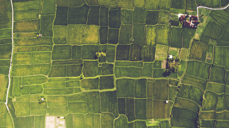 Photo pour Top view from drone of the beautiful paddy fields with velvet green young sprouts in Balinese village. The traditional method for cultivating rice with flood the fields after setting young seedlings - image libre de droit