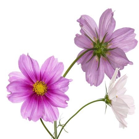 Photo pour Beautiful pink flowers Flower card - image libre de droit
