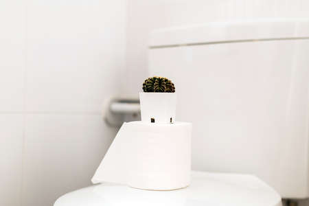 Photo pour Beautiful green cactus in restroom,Concept for hemorrhoids,Constipation disease - image libre de droit