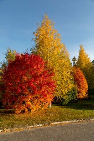 Trees with a red and yellow foliage close-up against a blue sky