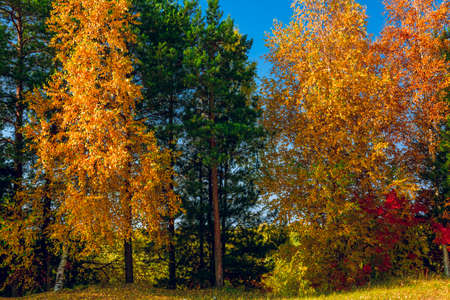 Trees with green red and yellow foliage close up