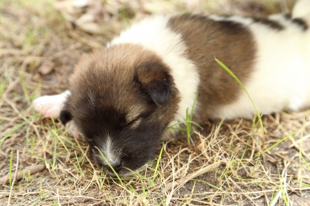 puppy dog sleeping on the grass