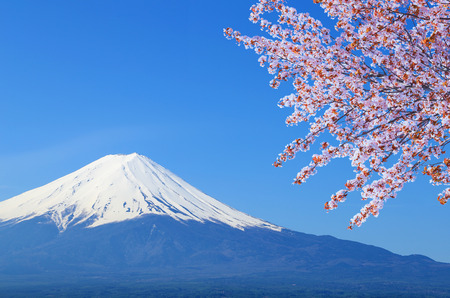 peak of Mount Fuji with Cherry Blossom, view from Lake Kawaguchiko, Japan