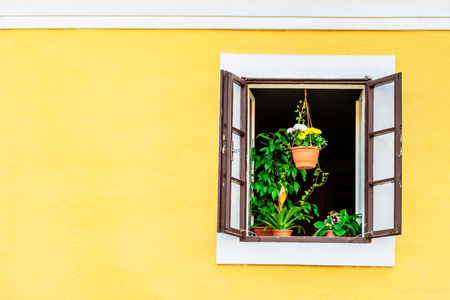 Foto de Green house plants on the window sill of the brown opened window on the yellow building - Imagen libre de derechos
