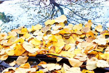 autumn yellow leaves on a car windshield