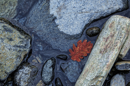 river rocks with water and red leaf, in a winter day, blue light
