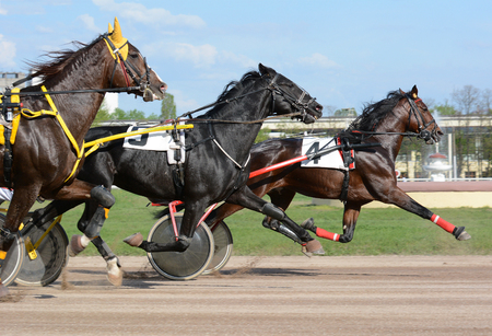 Photo pour Harness horse racing. Three horse trotter breed on the move on hippodrome - image libre de droit