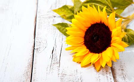 Photo pour Sunflower on blue white wooden background - image libre de droit