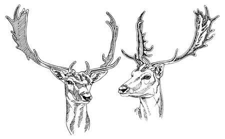 Ilustración de Hand drawn deer heads. Vector illustration. - Imagen libre de derechos