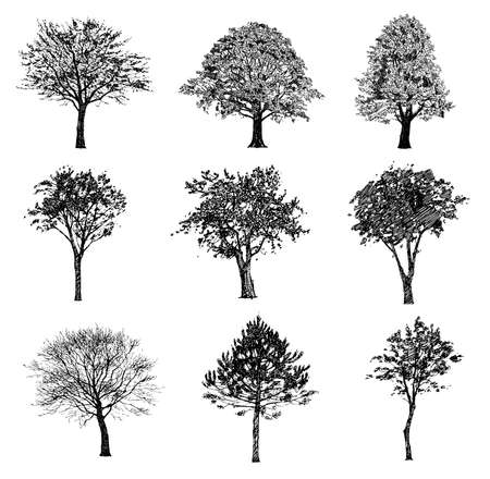 Illustration pour Set of hand drawn trees. Drawing illustration vector. - image libre de droit