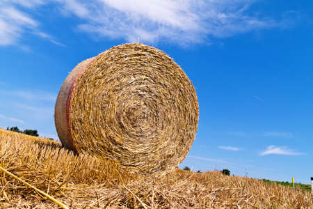 A field with straw bales after harvest in agriculture.