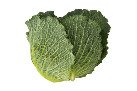 Photo for Organic food. Green savoy cabbages isolated on white background fresh green head. - Royalty Free Image
