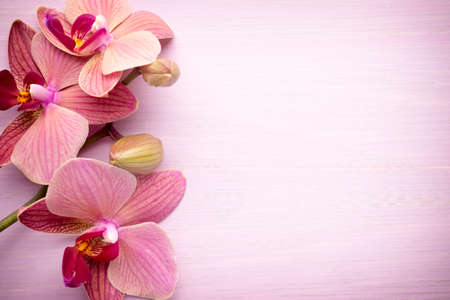 Photo for Pink orchid flower. Greeting background. - Royalty Free Image