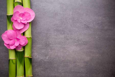 Photo pour Close up view of spa theme objects on grey background. - image libre de droit