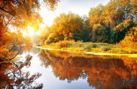 Foto de River in a delightful autumn forest at sunny day - Imagen libre de derechos