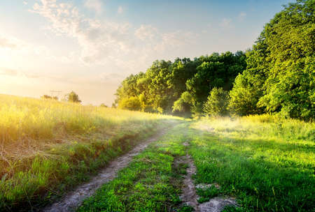 Foto de Field with country road in the morning - Imagen libre de derechos