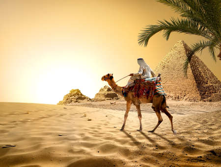 Photo for Camel near pyramids in hot desert of Egypt - Royalty Free Image