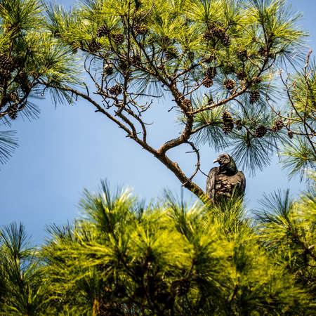 Foto de OLYMPUS DIGITAL CAMERA - Imagen libre de derechos