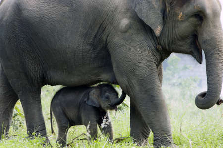 Photo for Mother elephant and her baby - Royalty Free Image