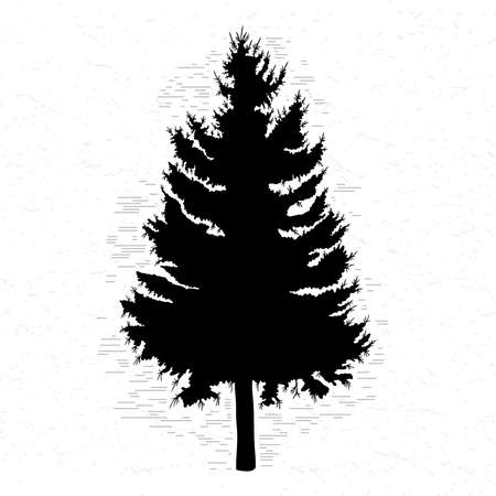 Illustration pour Vector silhouette of Canadian pine tree. Conifer tree silhouettes on the white textured background. - image libre de droit