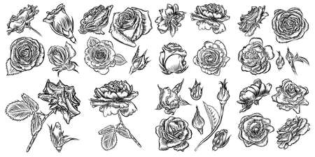 Illustration for Roses icon set collection - Royalty Free Image