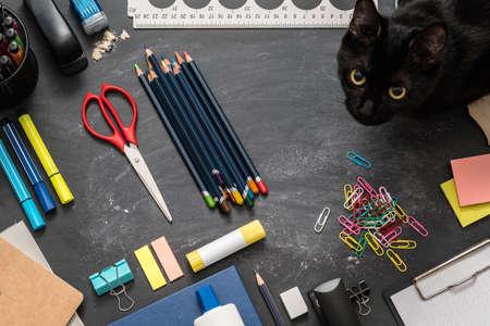 Foto de Student home workplace. Top view of school essentials and black cat on chalkboard desk. - Imagen libre de derechos
