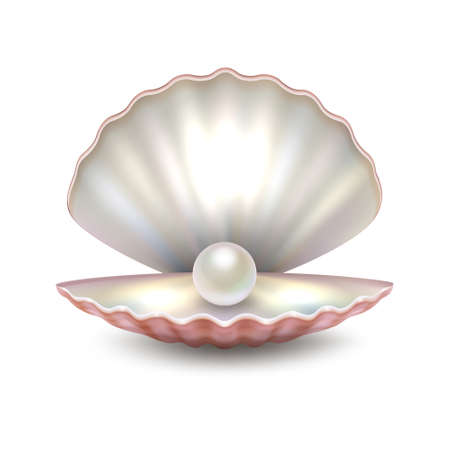 Illustration pour Realistic vector beautiful natural open sea pearl shell closeup isolated on white background. Design template, clipart, icon or mockup in EPS10. - image libre de droit