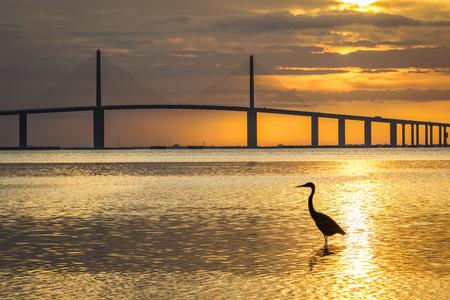 Photo pour Great Blue Heron silhouetted at sunrise with the Sunshine Skyway Bridge in the background - Fort De Soto Park, St. Petersburg, Florida - image libre de droit