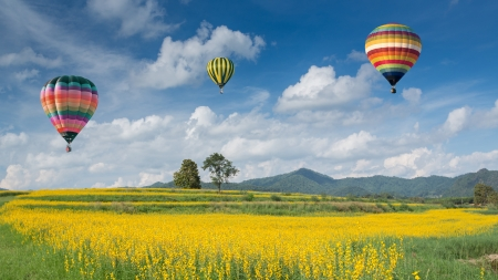 Photo for Hot air balloon over yellow flower fields against blue sky - Royalty Free Image