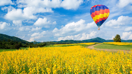 Photo for Hot air balloon over yellow flower fields and blue sky background - Royalty Free Image