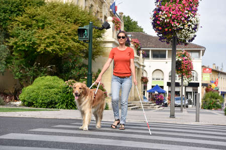 Photo pour Blind woman crossing the street with help of guide dog - image libre de droit