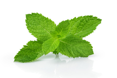Photo for fresh mint leaves , isolated on white background - Royalty Free Image