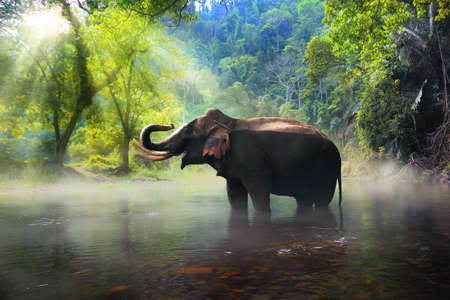 Foto de Wild elephant in the beautiful forest at Kanchanaburi province in Thailand, (with clipping path) - Imagen libre de derechos