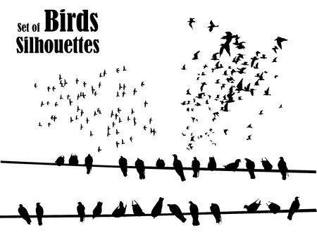 Illustration pour Set of birds silhouettes - flying, sitting. - image libre de droit