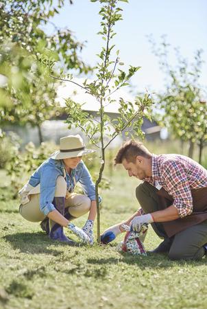 Photo pour Couple of farmers planting tree - image libre de droit