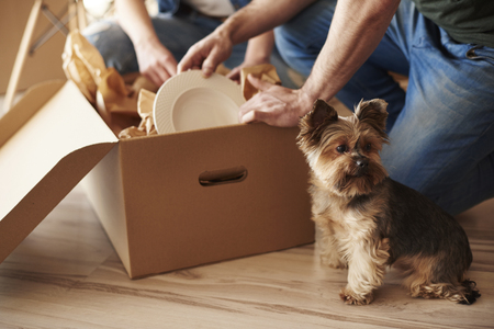 Photo for Top view of adorable dog and owners in background  - Royalty Free Image