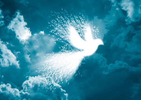 Photo for Peace dove- White dove with heart flying in blue sky background - Royalty Free Image