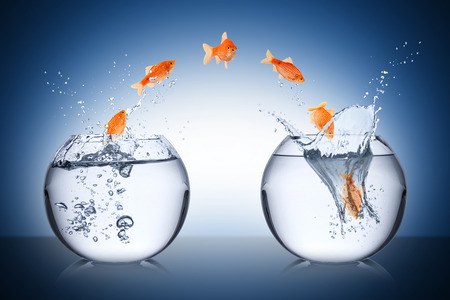 Photo for fish change concept - Royalty Free Image