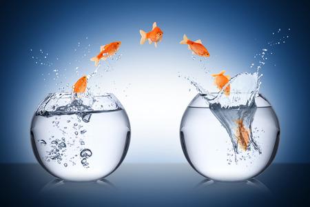 Photo pour fish change concept - image libre de droit