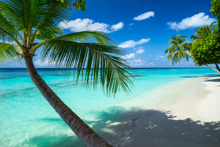 Photo for coco palms on paradise beach - Royalty Free Image
