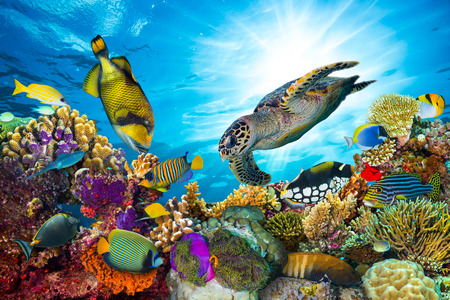 Photo pour colorful coral reef with many fishes and sea turtle - image libre de droit