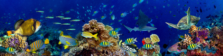 Photo for underwater coral reef landscape in the deep blue ocean with colorful fish and marine life wide format panorama background wallpaper - Royalty Free Image