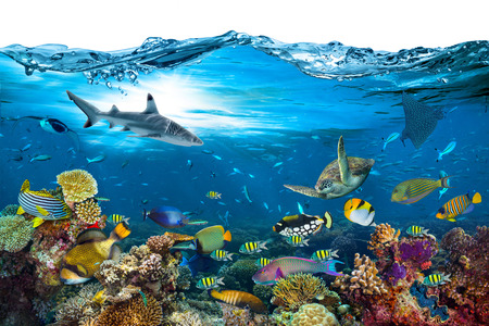 Photo pour underwater paradise background coral reef wildlife nature collage with shark manta ray sea turtle colorful fish with wave in front isolated on white background - image libre de droit