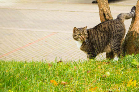 Photo for the street cat marks the tree - Royalty Free Image
