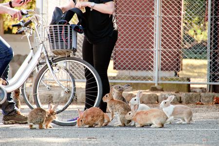 Photo for cute wild bunny rabbits in japan's rabbit island, okunoshima - Royalty Free Image